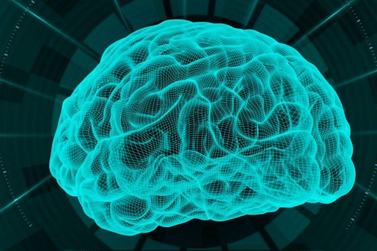 W PAN-ie zbadają plastyczność ludzkiego mózgu